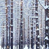 Зимний лес :: Иван Сагиров