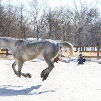 И только лошади летают... :: Юлия Иванова (Константинова)