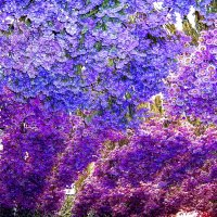 цветочный базар :: Александр Корчемный