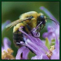 Bee. :: Gene Brumer
