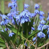 Цветы в саду :: Андрей