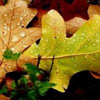 После дождя! :: Владимир Шошин