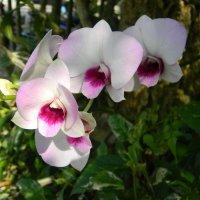 Дикая орхидея :: Ирина Михайловна