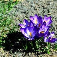 Весна в Солт-Лейк-Сити :: Валерий Жданов