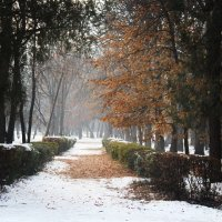 весна, лето, осень зима! :: Раджив Пирмедов
