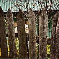 На заборе :: Татьяна Губина
