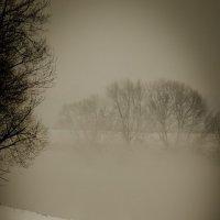 Туман :: Екатерина Ануфриева