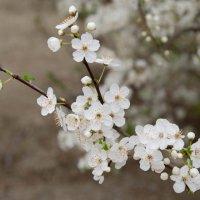 Весна пришла :: Ольга Канищева