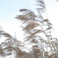 еще морозное растение :: esadesign Егерев