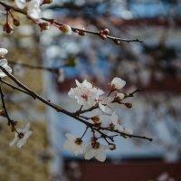 Весна :: Alexey Bogatkin