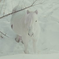 Белая Лошадь. :: Алексей Хоноруин