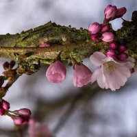 Уже цветет... :: igor G.