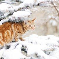 мартовский кот :: Tatiana Florinzza
