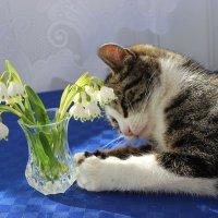 Весна :: Mariya laimite