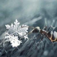 сегодня снова падал снег) :: Анна Чернобай