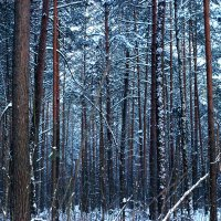 Сгущается вечер в лесу.... :: Леся Прокопенко