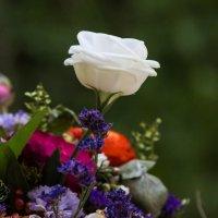 Белая роза :: Gary Snayder
