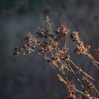 Весна :: Вероника Швец