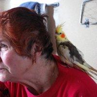 Бабушка и попугайчик... :: Наталия Марченко