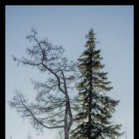 В объятиях солнечных лучей, согретый снегом весенний лес. :: Kamil Nureev