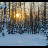 Весенний закат в лесу :: Kamil Nureev
