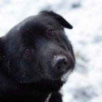 Грустный пес :: Oleg
