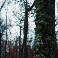 Дерево :: Сурикат Сусликов