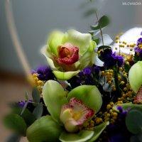 Цветы :: Ольга Милованова