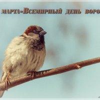 День воробья на ФотоКто :: Андрей Поляков