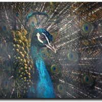 Animals :: Sasha Bobkov