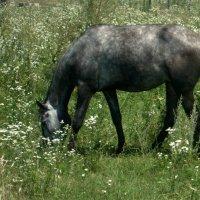 Конь в яблоках..)) :: ФотоЛюбка *