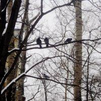 Птички тоже и ладят, и не ладят. :: Ольга Кривых