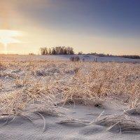 Деревенская, вечерняя картинка... :: Александр Никитинский