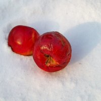 Яблоки на снегу :: Галина Pavel