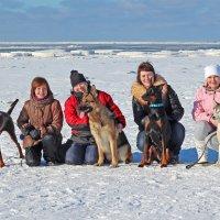 Белое море, женщины и их милые друзья :: Владимир Шибинский