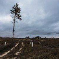 Шлагбаум открыт, а леса нет. :: Юрий Клишин