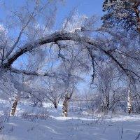 Под грузом зим... :: Rafael