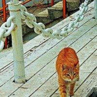 соленый кот :: Александр Корчемный