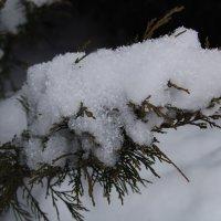 Последний снег. :: Нелли *