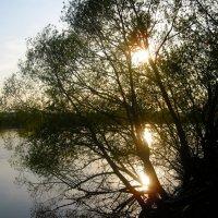 закат :: Любовь Жиркова