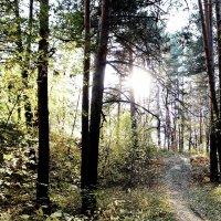 лес :: Ольга Чазова