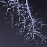 Дерево :: Джони Ноксвил