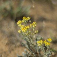 в жарком сухом климате :: олеся выкорчук