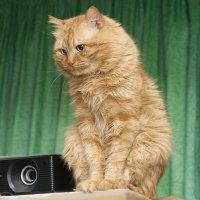 Крымский кот :: Андрей Боженков