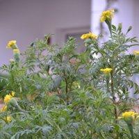 цветы :: Алексей Корзников