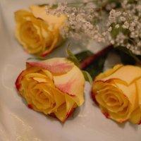 Розы :: Антонина Гусева