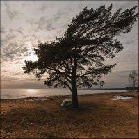 Побережье Финского залива.. :: Юрий