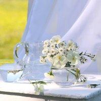 Белые   цветы :: Наталья Казанцева