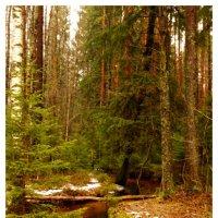Ручей в лесу :: Дмитрий Рожков