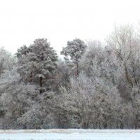 Деревья. :: Анна Кравченко